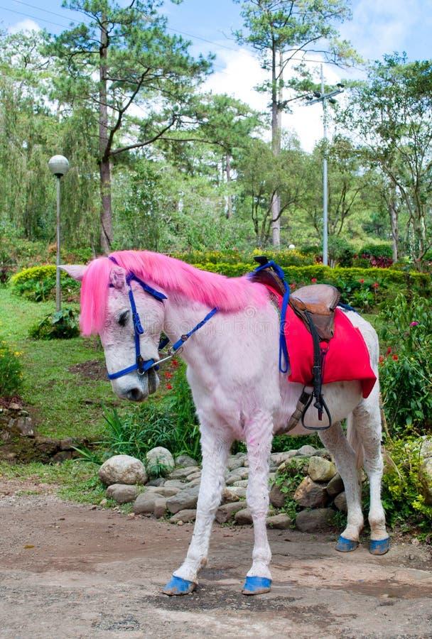 Cheval d'une chevelure rose photos libres de droits