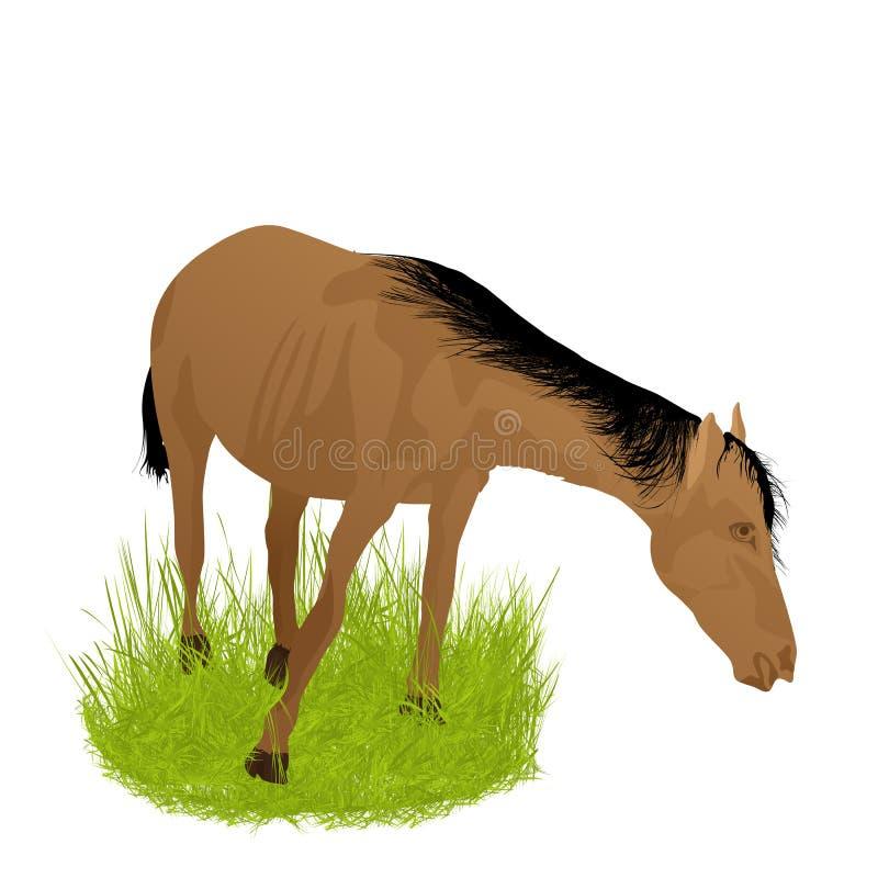 Cheval dans l'herbe illustration stock