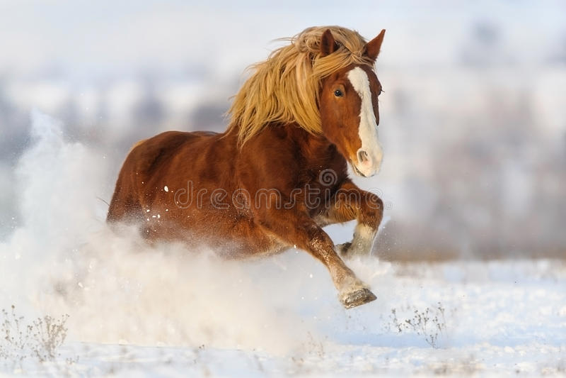 Cheval dans la neige image stock