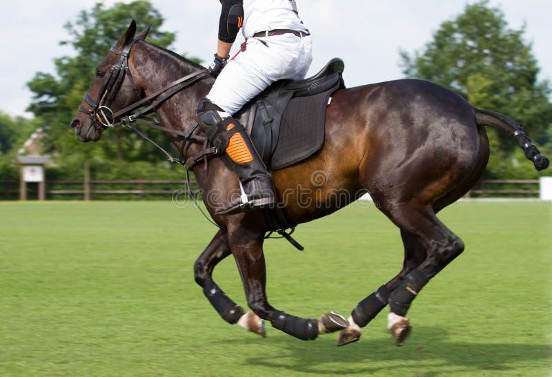 Cheval dans le jeu de polo images libres de droits