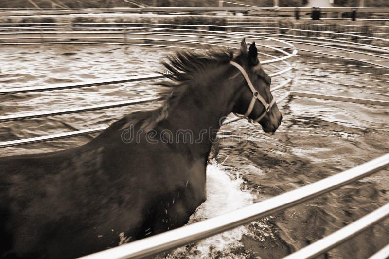 Cheval dans le marcheur d'aqua photographie stock libre de droits