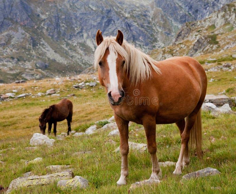 Cheval dans les montagnes photos libres de droits