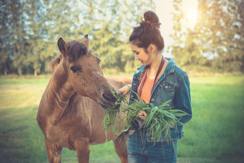 Cheval de alimentation de jeune femme avec l'herbe Fille asiatique avec l'animal dedans images stock
