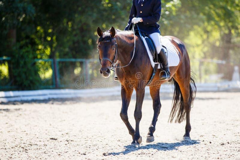 Cheval de baie avec le cavalier marchant sur le concours de dressage images libres de droits