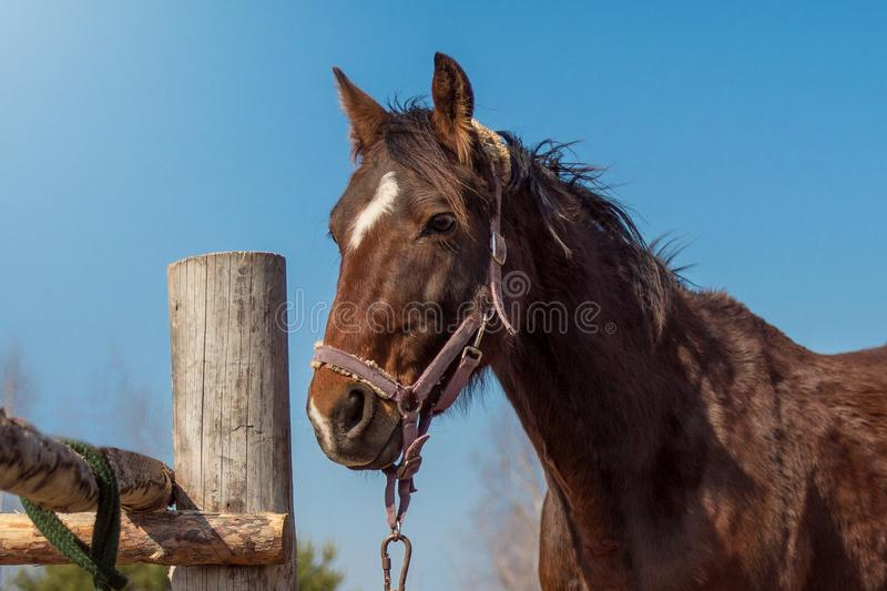 Cheval de Brown contre le ciel bleu photo stock