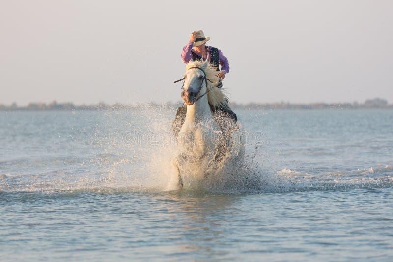 Cheval de Camargue fonctionnant dans l'eau photo libre de droits