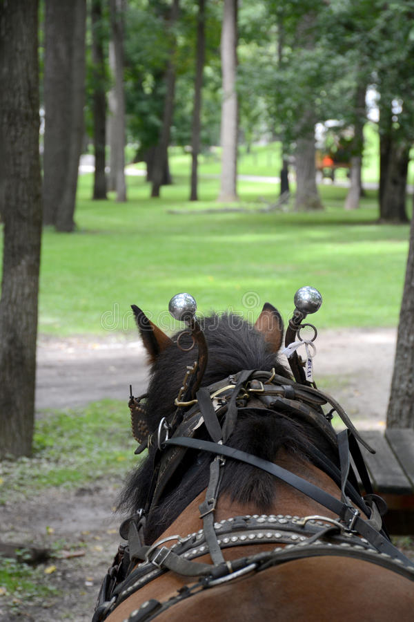 Cheval de chariot images libres de droits