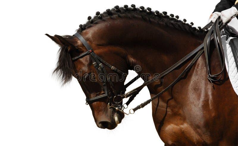 cheval de compartiment image stock