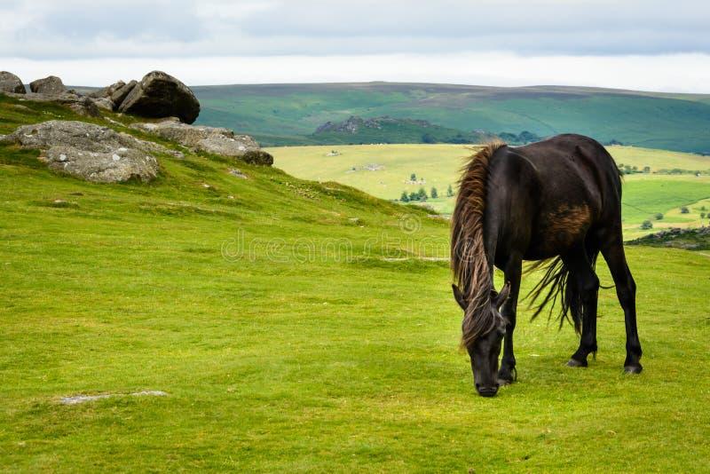 Download Cheval de Dartmoor photo stock. Image du chevaux, d0 - 76076026