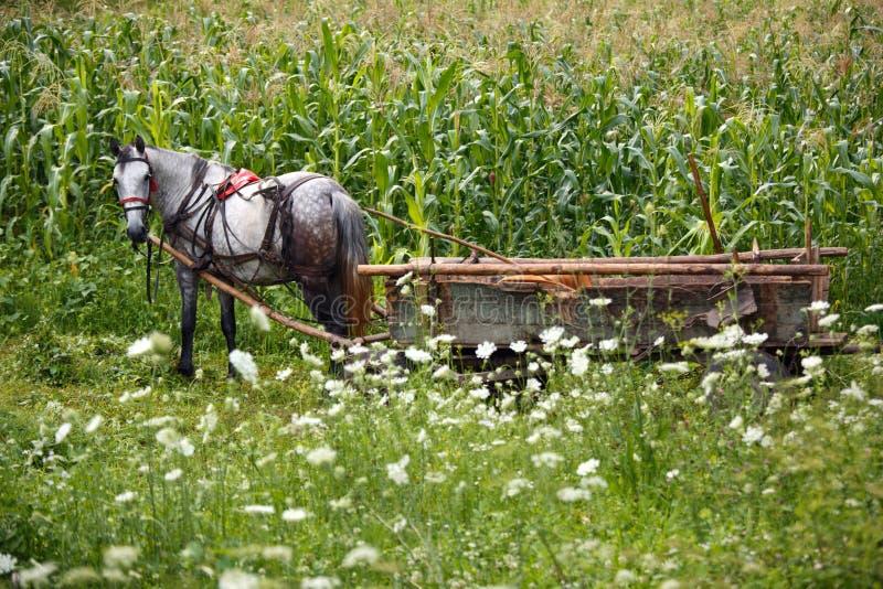 Cheval de fermier image libre de droits