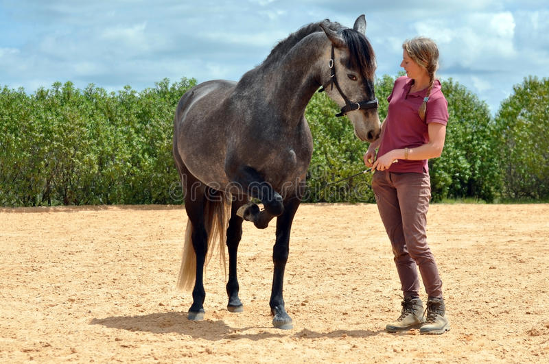 Cheval de formation de fille images libres de droits