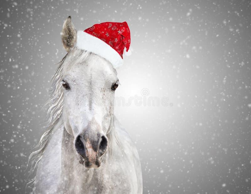Cheval de Noël blanc avec le chapeau de Santa sur les chutes de neige grises de fond images libres de droits