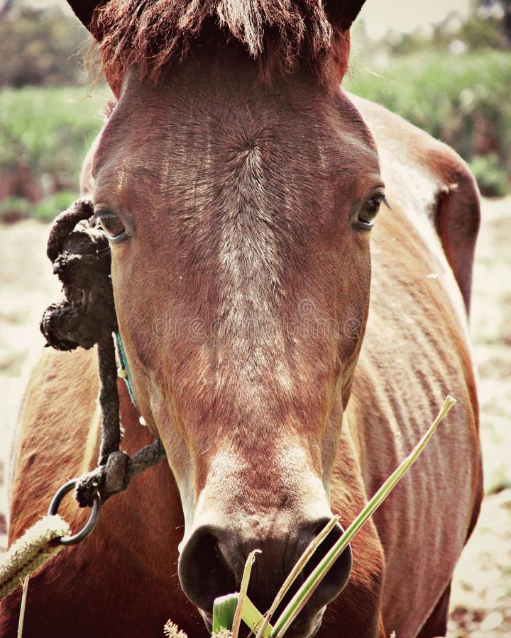 Cheval debout d'isolement photographie stock