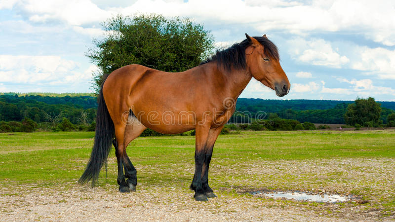 Cheval debout d'isolement images stock