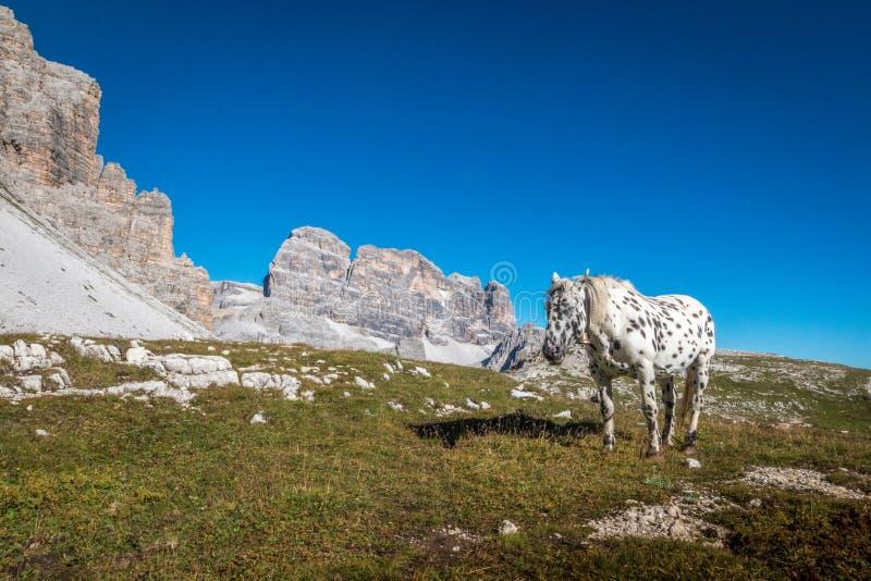 Cheval des montagnes de dolomites en Italie images stock
