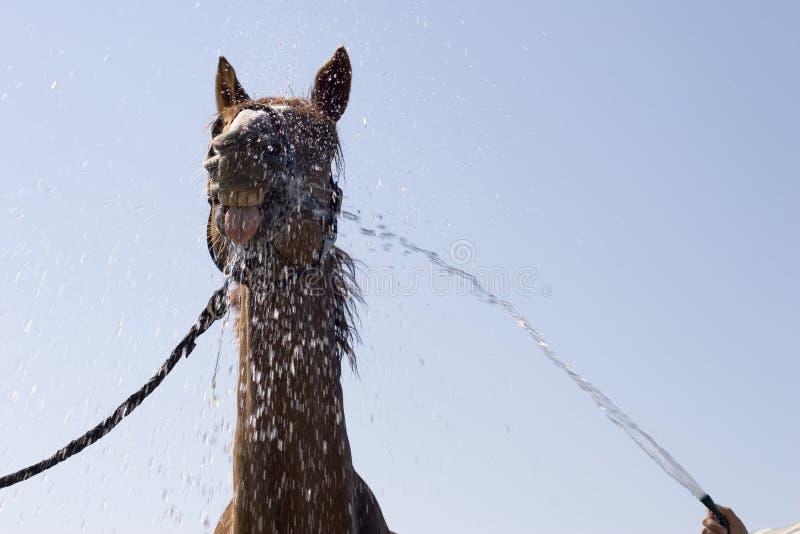 Cheval drôle photos stock