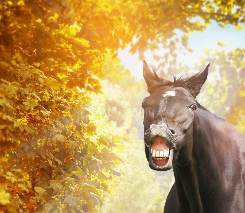 Cheval drôle dans le feuillage d'automne en soleil photo libre de droits
