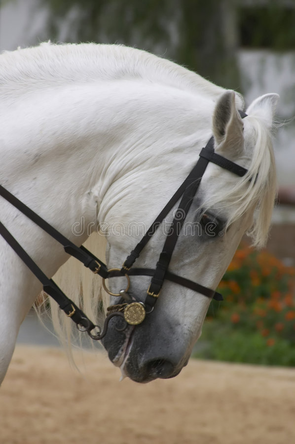 Cheval en Andalousie, Espagne photo stock