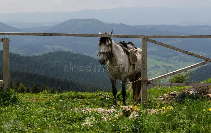 Cheval en montagne Bel horizontal normal photographie stock