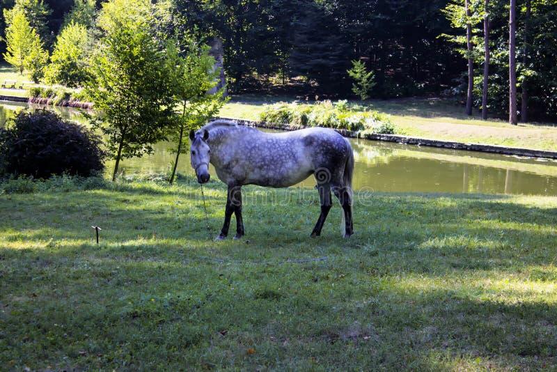 Cheval en parc dehors image stock