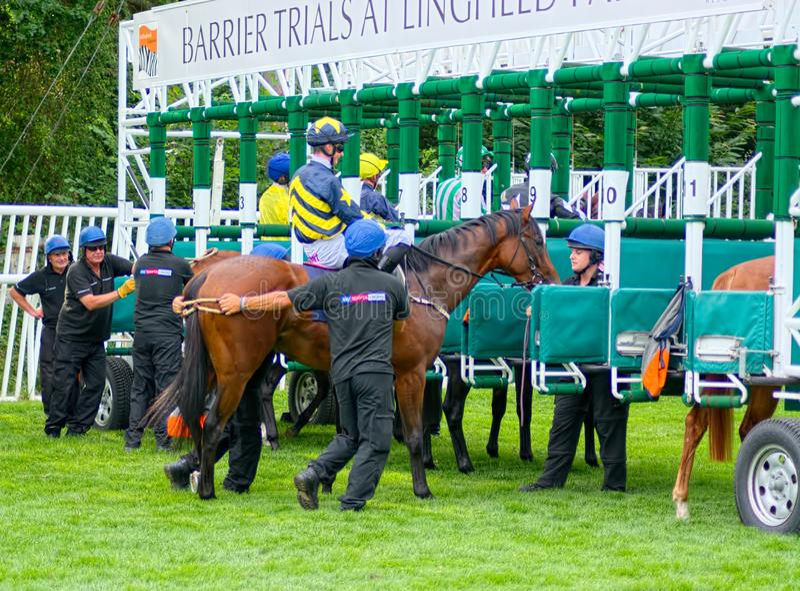Cheval entrant dans des stalles Jockey de course de chevaux d'Eoin Walsh photographie stock libre de droits