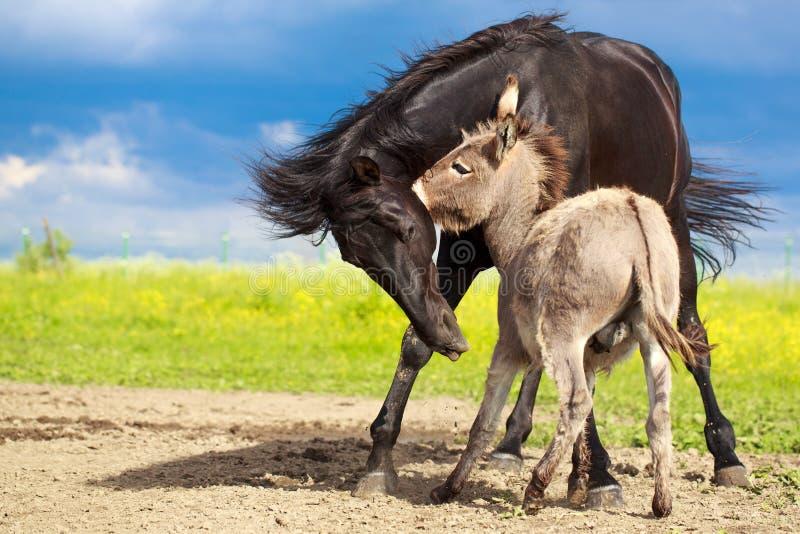 Cheval et âne images stock