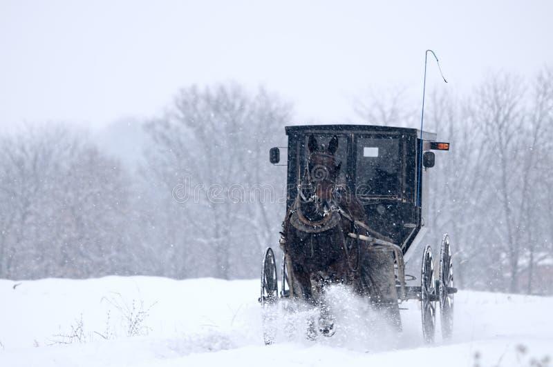 Cheval et avec des erreurs amish, neige, tempête image libre de droits