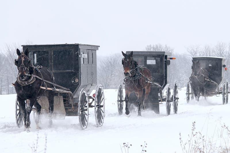 Cheval et avec des erreurs amish, neige, tempête images libres de droits