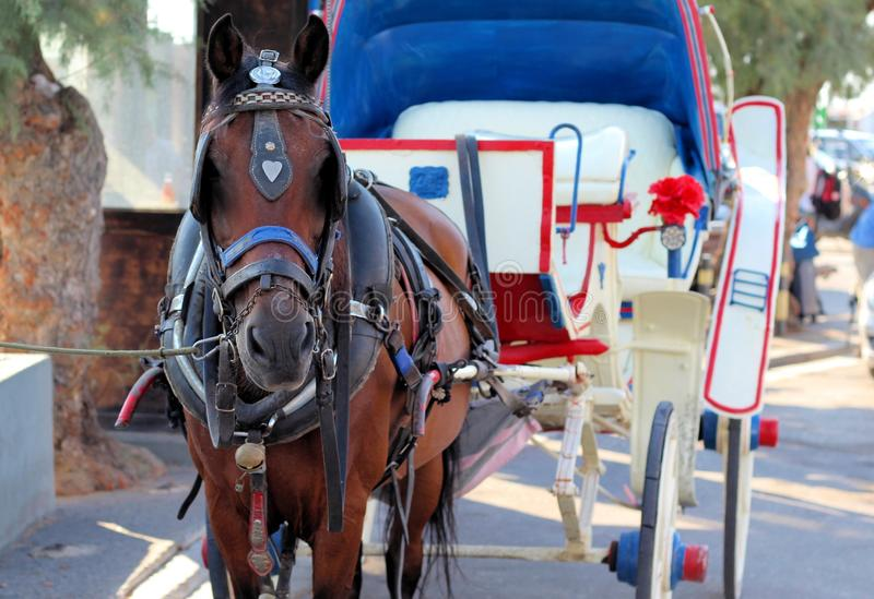 Cheval et chariot photographie stock