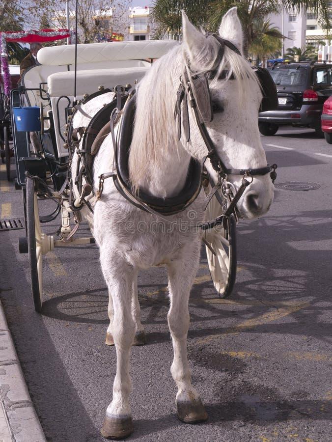 Cheval et chariot dans la rue à Nerja sur l'extrémité orientale de Costa del Sol en Espagne images libres de droits