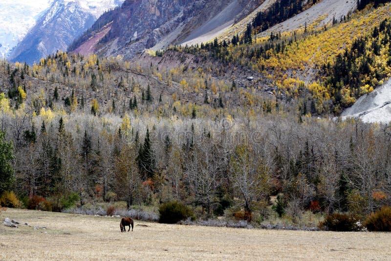 Cheval et forêt photographie stock libre de droits