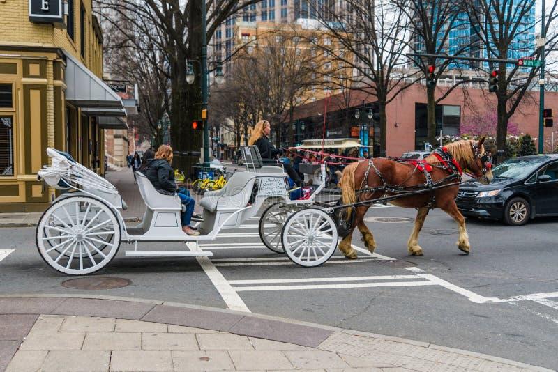 Cheval et guide touristique avec des erreurs à Charlotte la Caroline du Nord images stock