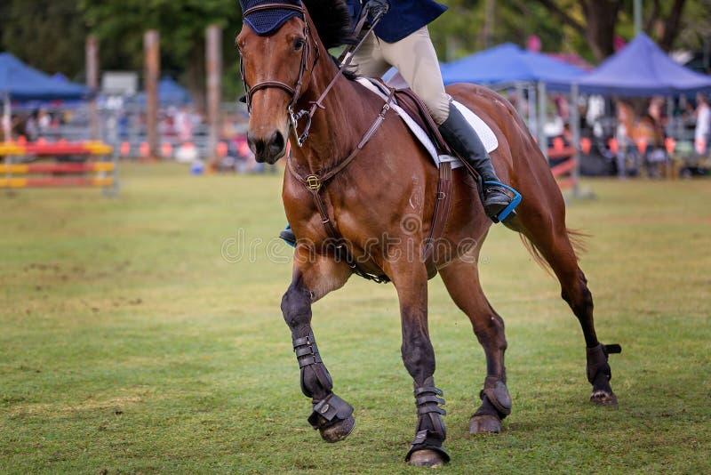 Cheval et Rider In Show Jumping Event à un rodéo de pays images libres de droits