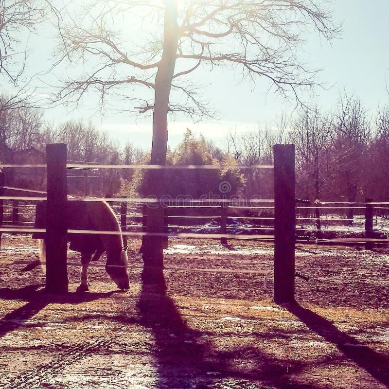 Cheval et soleil photos libres de droits