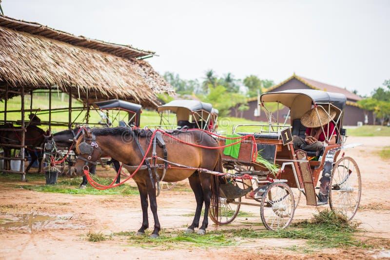 Cheval et un beau vieux chariot dans la vieille ferme photographie stock