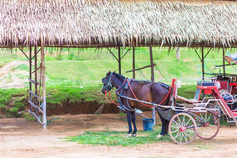 Cheval et un beau vieux chariot dans la vieille ferme photos stock