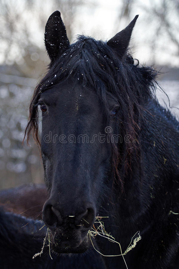 Cheval fier image stock
