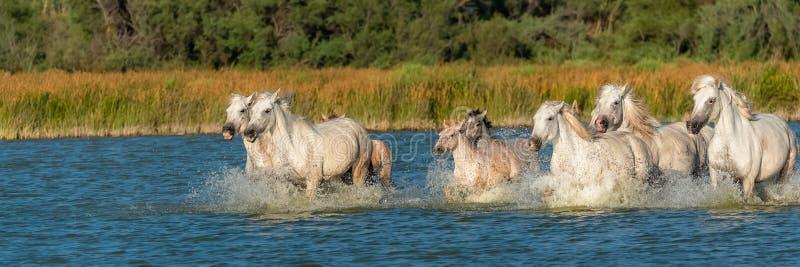 Cheval fonctionnant dans l'eau images stock