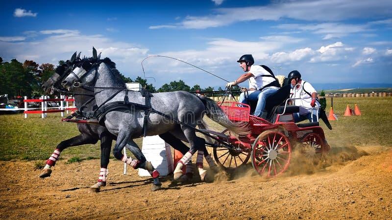 Cheval fonctionnant en concurrence de chariot images stock