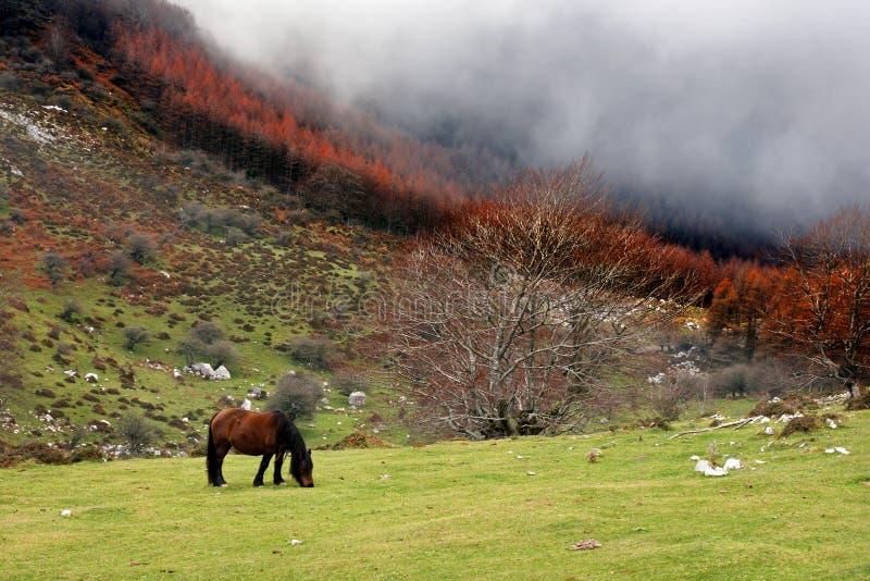 Cheval frôlant sur le champ avec le brouillard photographie stock libre de droits