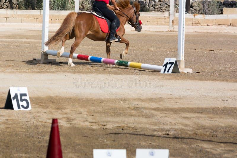 Cheval galopant sur le fond de tache floue à la concurrence équestre photos libres de droits