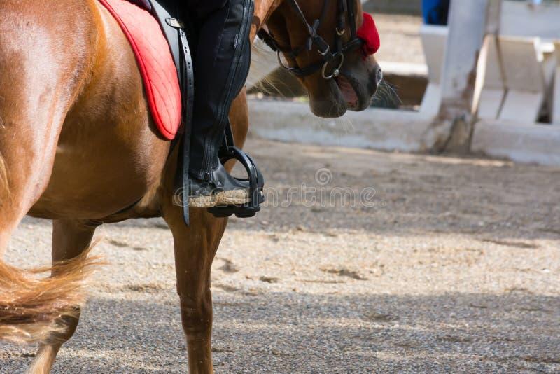 Cheval galopant sur le fond de tache floue à la concurrence équestre photographie stock libre de droits