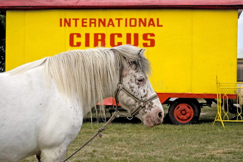 Cheval international de cirque images libres de droits