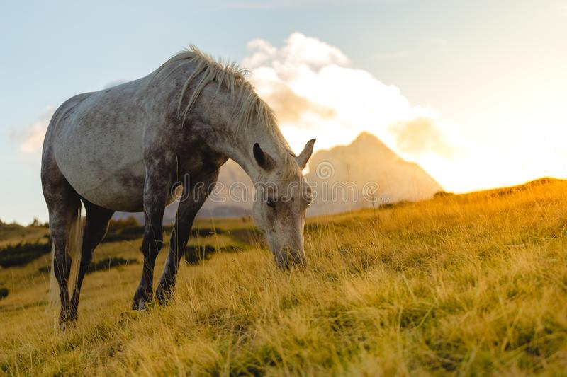 Cheval mangeant l'herbe dans le sauvage photographie stock