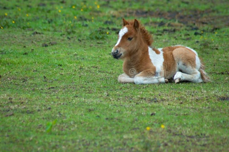 Cheval mignon dans l'herbe photographie stock libre de droits