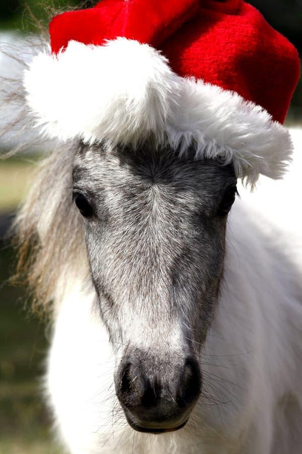 Cheval miniature de Noël photographie stock libre de droits