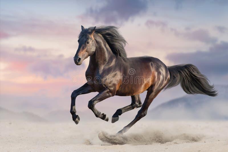 Cheval noir avec la longue crinière image libre de droits