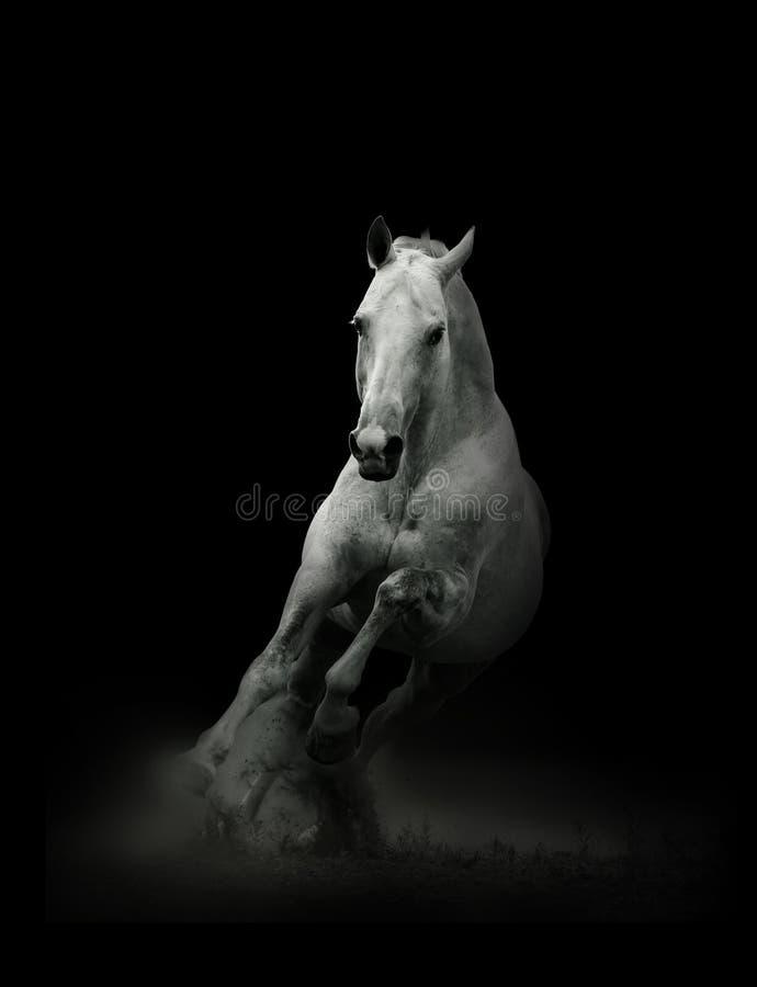 Cheval noir dans le domaine photo stock