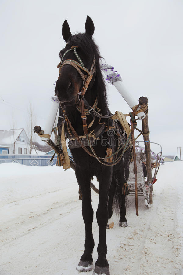 Cheval noir dans le harnais sur la route dans le village d'hiver image stock