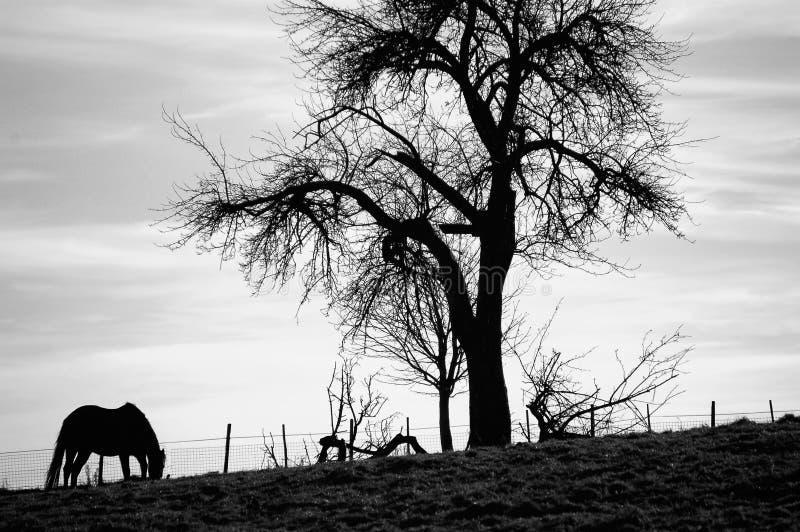Cheval par l'arbre photographie stock